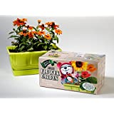 Little Flower Garden, Complete Kit for Kids, Includes Organic Non GMO Flower Seeds, Planter Box with Coloring-in-Case, Markers and Expanding Potting Soil Wafers. Instructions on Box.