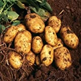 buy SEED POTATOES - 1 lb. Nicola Organic Grown Non GMO Virus & Chemical Free Ready for Spring Planting now, new 2020-2019 bestseller, review and Photo, best price $8.24