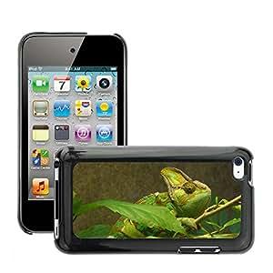 Etui Housse Coque de Protection Cover Rigide pour // M00108862 Animal Reptil del camaleón // Apple ipod Touch 4 4G 4th