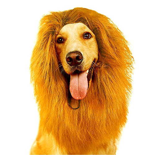 Unique Diy Costumes Halloween (Lion Mane for Dog | Funny Large/Medium Dog Halloween Costumes | Unique Lion Hair Ideas from Furpaw (Without Tail, Gold))