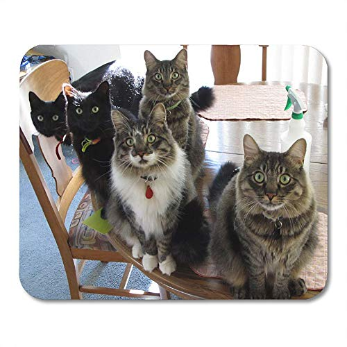 - LIminglove Five Gang of Cats Funny Rescued Adopted Cute Gaming Mouse Pad,Non-Slip and Dust-Proof Mouse,Funny Creative Mouse pad