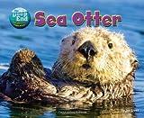 Sea Otter, Jen Green, 1617729221