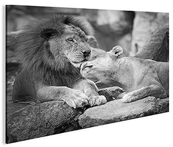 Islandburner Bild Bilder Auf Leinwand Löwen Paar Sw Schwarz
