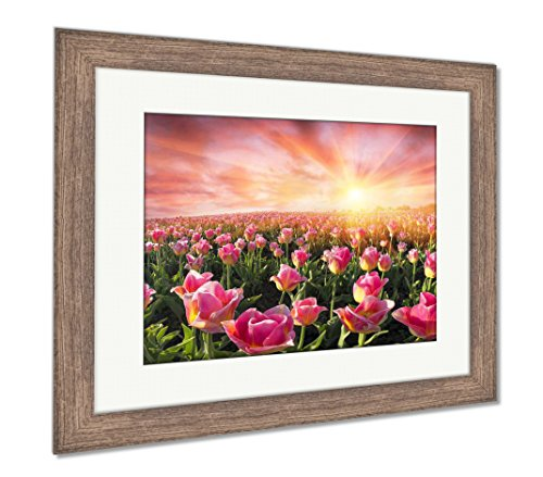 Field of Tulips in Chernivtsi, Wall Art Home Decoration, Color, 26x30 (Frame Size), Rustic Barn Wood Frame, AG6191635 ()