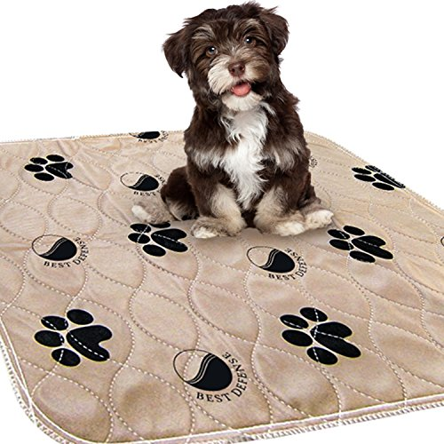 - Best Defense Washable Pee Pads for Dogs, 2- Pack Large 30 x 32 Reusable Dog, Puppy Wee Wee, Whelping and Training Pad for Home, Apartment, Crate and Travel