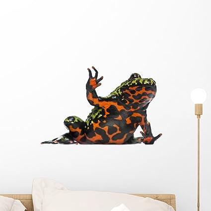 Buy Wallmonkeys Oriental Fire-bellied Toad Waving Bombina