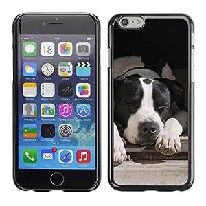 TopCaseStore / la caja del caucho duro de la cubierta de protección de la piel - Boston Terrier White Black Dog - Apple iPhone 6 Plus 5.5