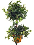 "MINI ENGLISH IVY TOPIARY 23""H."