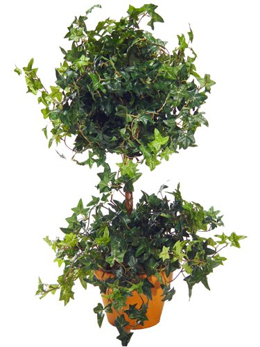 MINI ENGLISH IVY TOPIARY 23