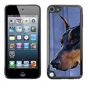 TopCaseStore / la caja del caucho duro de la cubierta de protección de la piel - Doberman Pinscher Canine Dog Miniature - Apple iPod Touch 5