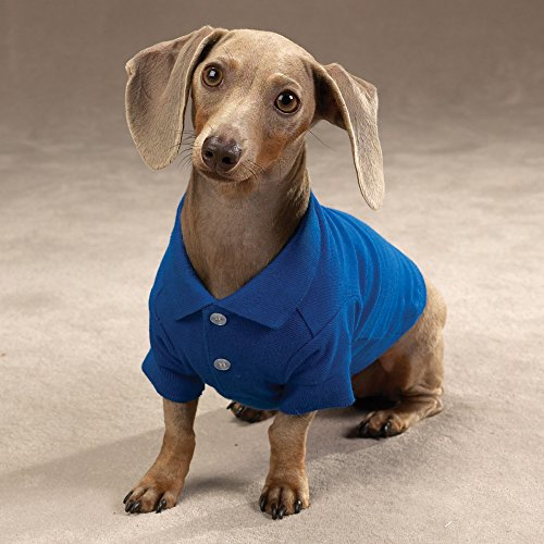 Image of Zack & Zoey Cotton Polo Shirt for Dogs, 24