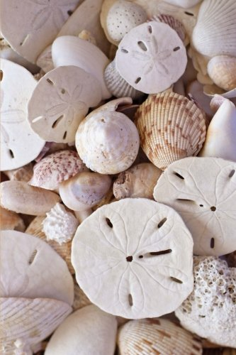 Sand Dollars and Seashells Coastal Charm Design Journal: 150 Page Lined (Seashell Journal)