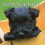 Scottish Terrier Puppies 2007 Calendar