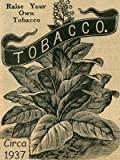 Connecticut Broadleaf Tobacco Seeds ~100 seeds