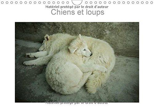 Chiens Et Loups 2017: Photographies De Chiens Et Loups De France Et Du Canada (Calvendo Animaux) (French Edition) by Calvendo Verlag GmbH