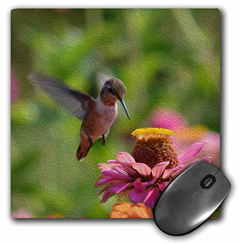 3dRose PS Flowers - Painted Hummingbird in Flight with Zinnia Flower - MousePad - Flight Zinnia