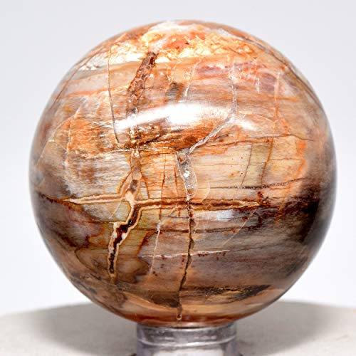 48mm Petrified Wood Sphere Multicolor Natural Crystal Ball Fossil Mineral Fossilized Tree Earth Energy Stone - Madagascar + Plastic Stand by HQRP-Crystal (Image #1)
