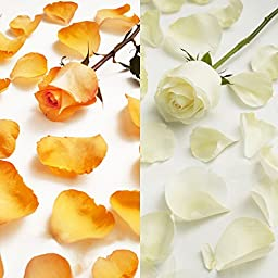Farm Fresh Natural White - Orange Rose Petals - 5000 petals