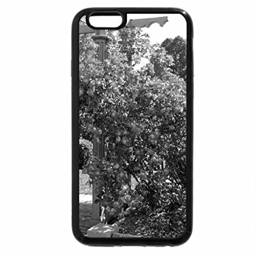 iPhone 6S Case, iPhone 6 Case (Black & White) - Garden Rose Trelis