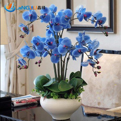100-pcs-pack-free-shipping-phalaenopsis-saplings-bonsai-orchid-seeds-fleur-de-lis-blue-flower-blue-f