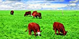 Nature's Seed 1 Acre Southwest Semi-Arid Steppe Beef Cattle Pasture Blend