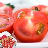 山梨県南アルプス市より「あまーいフルーツトマト」お届けします。「太陽のめぐみ」(無選別1kg)