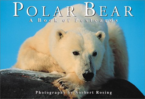 Polar Bear: A book of postcards (Firefly Postcard Book) ()