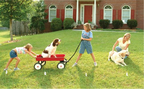 Electric Dog Fence Reviews