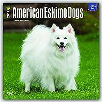 American Eskimo Dogs 2017 Square 12x12 Wall Calendar