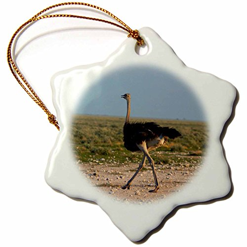 3dRose ORN_187964_1 Ostrich, Struthio Camelus, Etosha Np, Namibia, Africa. Snowflake Ornament, Porcelain, 3-Inch (Ostrich Ornament)