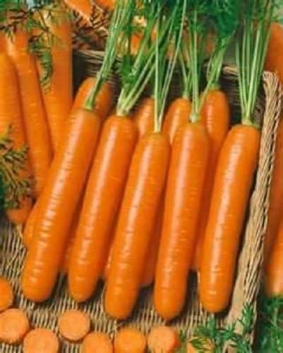 50 Semillas Semillas pequeños dedos de zanahoria no modificada ...