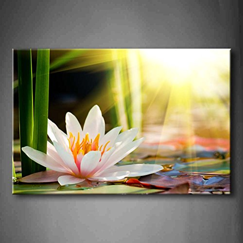 First Wall Art - Beautiful Water Lily Sunshine Wall Art Painting The Picture Print On Canvas Flower Pictures For Home Decor Decoration Gift (Stretched By Wooden Frame,Ready To Hang) ()