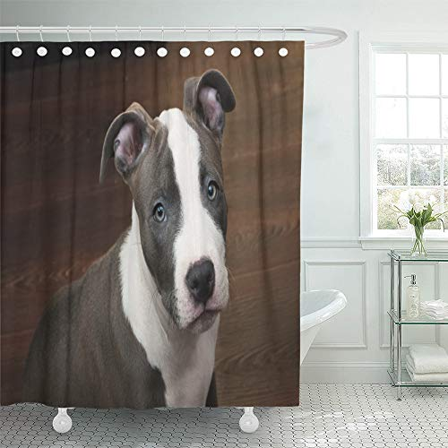 Emvency Shower Curtain Set Waterproof Adjustable Polyester Fabric White and Gray Color Pitbull Puppy Sitting on Dark Wood Floor Blue Nose 72 x 78 Inches Set with Hooks for Bathroom