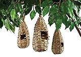 Miles Kimball Bird's Nests - Set Of 3