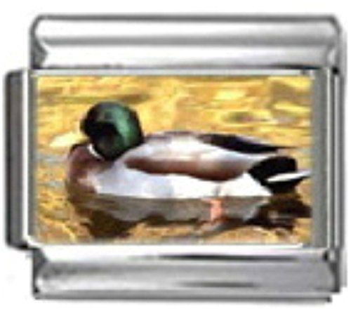 DUCK MALLARD BIRD Photo Italian Charm 9mm Link - 1 x BI018 Single Bracelet Link