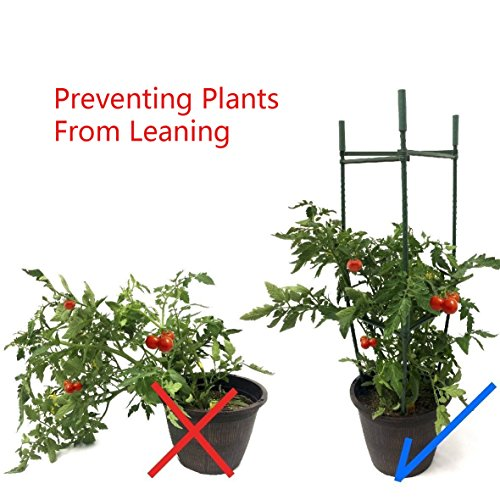 F.O.T 3-Sets Tomato Cage Plant Support Garden Stakes 2ft Long Steel with Plastic Coated Plant Sticks, Sturdy Garden Plant Support Stakes with Connecting Rod (3) by F.O.T (Image #5)