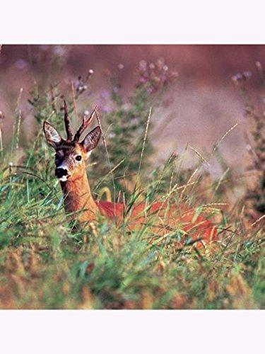 WSM 3 -Wildschutzmischung 3 -