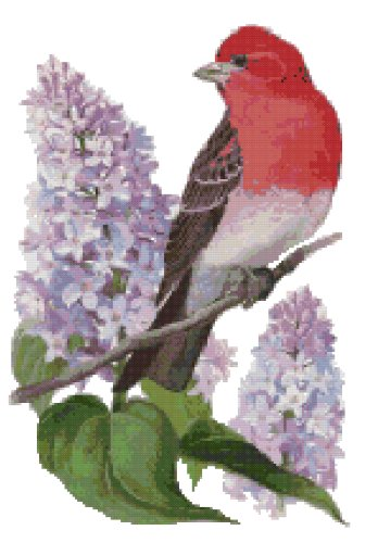 New Hampshire State Bird (Purple Finch) and Flower (Purple Lilac) Counted Cross Stitch Pattern