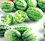 Mexican Sour Gherkin Cucumber Cucamelon Mouse Melon bin1 (25+ Seeds, or 1/10 Gram)