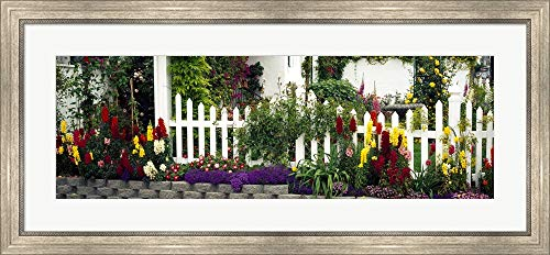 Flowers and Picket Fence in a Garden, La Jolla, San Diego, California, USA by Panoramic Images Framed Art Print Wall Picture, Silver Scoop Frame, 41 x 19 inches