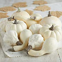 Factory Direct Craft Collection of 12 Assorted Size Harvest Off White Faux Gourds and Pumpkins