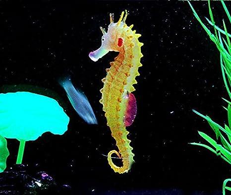adornos para acuarios casera decoracion ambiente artificial simulation hippocampus accesorios peceras marinos (Naranja)