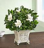 1-800-flowers Indoor Plants