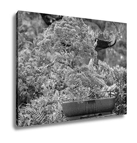 Ashleyキャンバス盆栽ツリーの中央のエキゾチックガーデンin Tampa Florida 20