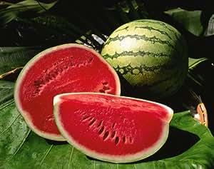 Jayseeds™ Organic Picnic Watermelon Seeds Certified 30 Seeds #287000 Item UPC#650348691608