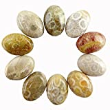 JCGJ Semi Precious Stones,Healing Natural Coral Fossil Oval Cab Cabochon for Jewelry Making(18x13x6mm,10pcs)
