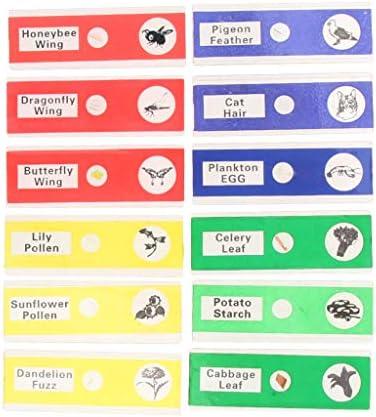 12x顕微鏡 スライド 生物学的 サンプル セクション 教育玩具