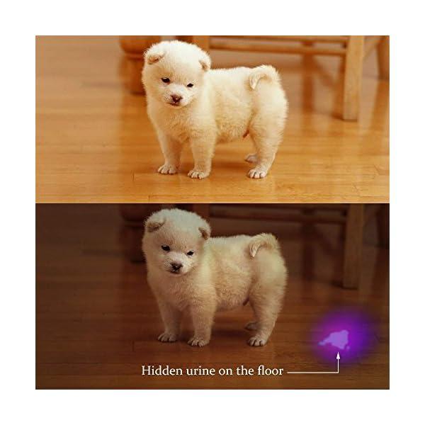 LOFTEK UV Flashlight Black Light, 51 LED 395 nM Ultraviolet Flashlight Perfect Detector for Pet (Dog and Cat ) Urine, Dry Stains and Bed Bug, Handheld Blacklight for Scorpion Hunting 3