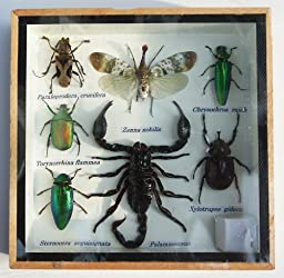 REAL MIXS VERY INSECT TAXIDERMY SET IN BOXES DISPLAY FOR COLLECTIBLES