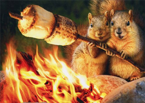 Squirrels Toasting Marshmallow - Avanti Funny Anniversary Card